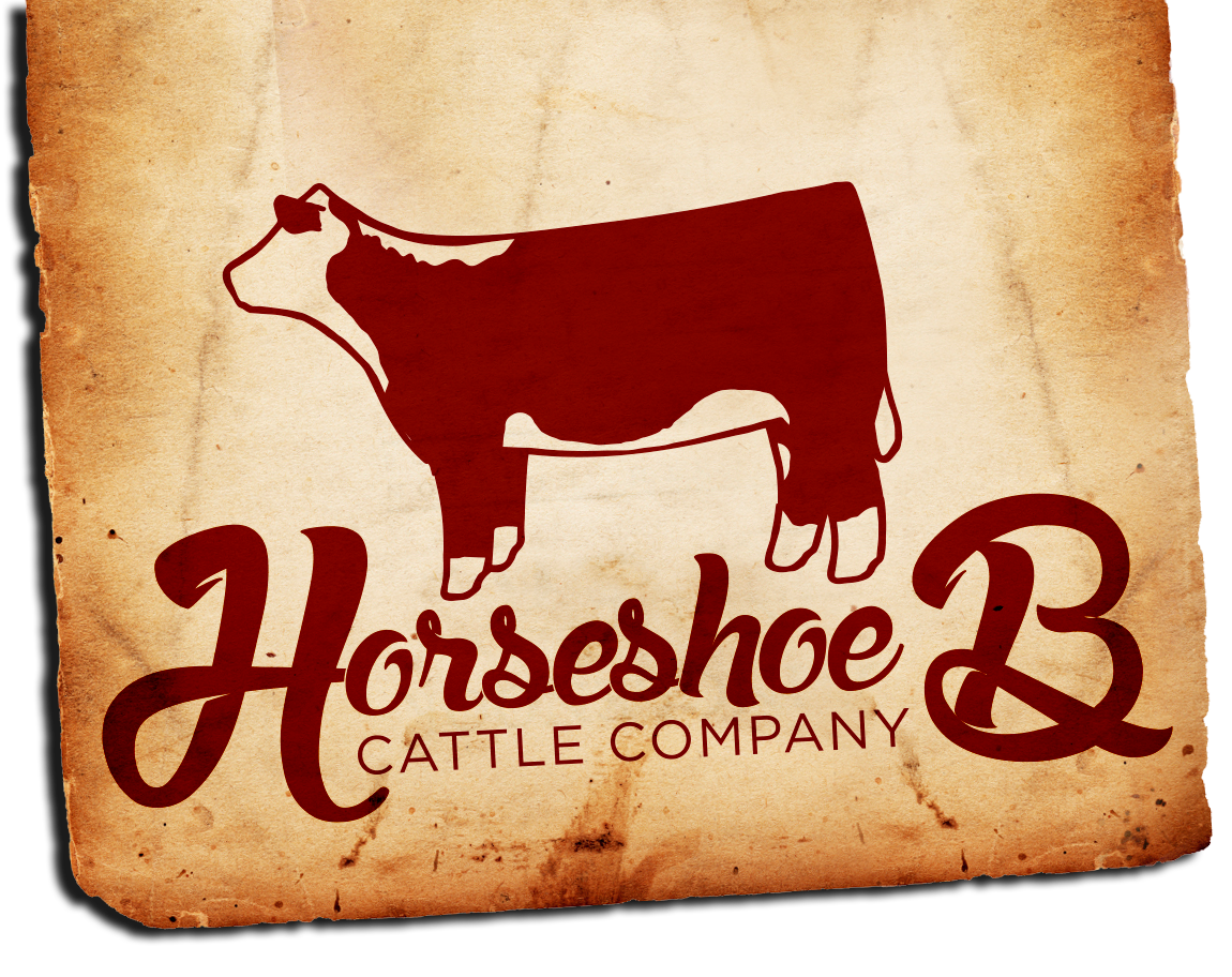 Horseshoe B Cattle